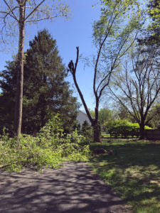 Tree Service Chadds Ford