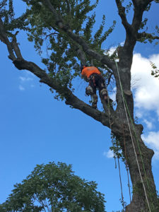 Tree Removal Springfield