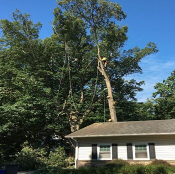 Storm Damage Service Glen Mills