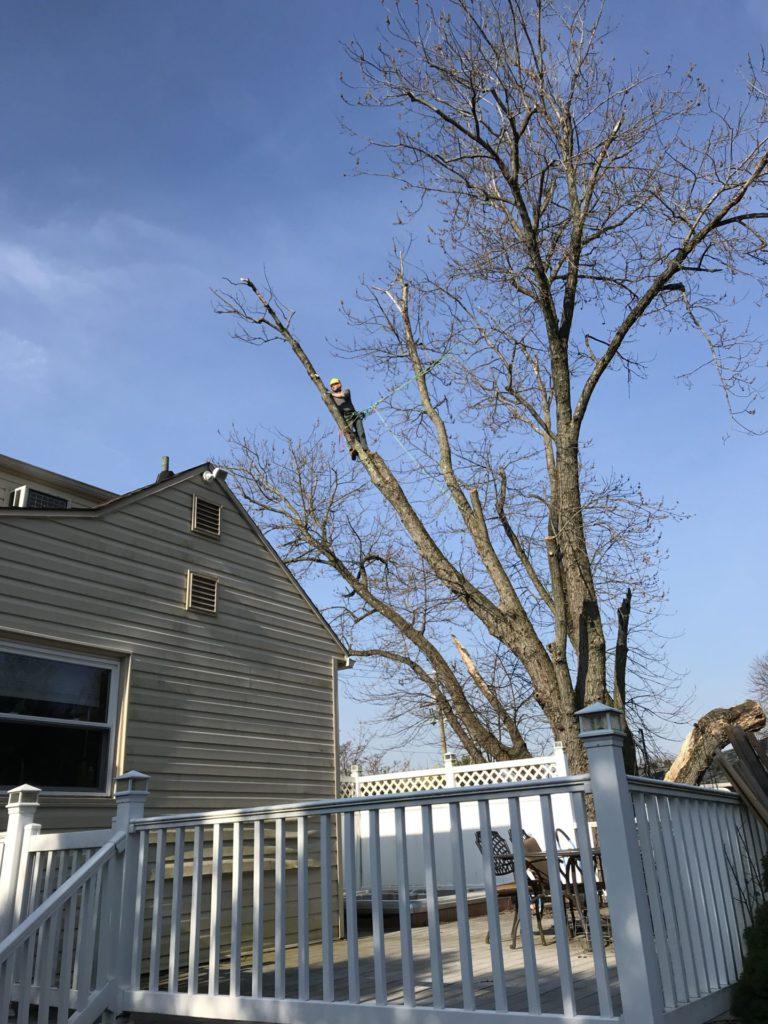 Tree service aston